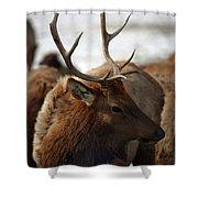 Bull Elk At Hardware Ranch 2 Shower Curtain