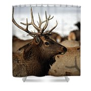 Bull Elk At Hardware Ranch Shower Curtain