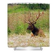 Bull Elk At Rest Shower Curtain