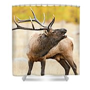 Bull Elk Bugling In The Fall Shower Curtain