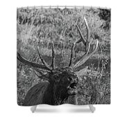 Bull Elk Bugling Shower Curtain