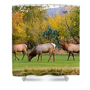 Bull Elk  Bugling With Cow Elks - Rutting Season Shower Curtain