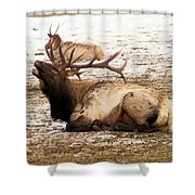 Bull Elk Calls Out Shower Curtain