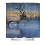 Bull Elk Crossing The Madison River Shower Curtain