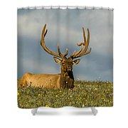 Bull Elk Friends For Now Shower Curtain