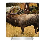 Bull Elk Has Been Wallowing Shower Curtain