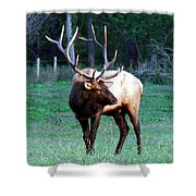 Bull Elk II Shower Curtain
