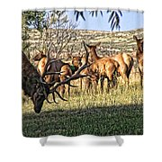 Bull Elk In Point Shower Curtain