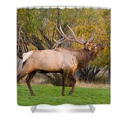 Bull Elk In Rutting Season Shower Curtain