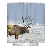 Bull Elk In Snow Shower Curtain