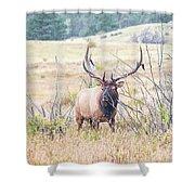 Bull Elk In The Rain Shower Curtain