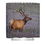 Bull Elk In Velvet Shower Curtain