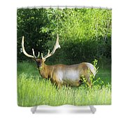 Bull Elk In Velvet  Shower Curtain by Jeff Swan