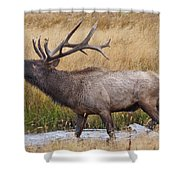 Bull Elk In Yellowstone Shower Curtain by Wesley Aston