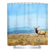 Bull Elk Meadow Shower Curtain