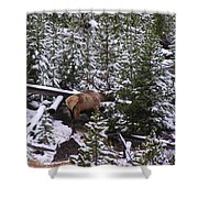 Bull Elk Shower Curtain