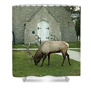 Bull Elk On The Church Lawn Shower Curtain