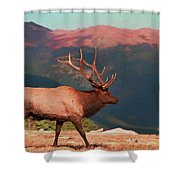 Bull Elk On Trail Ridge Road Shower Curtain