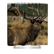 Bull Elk Profile Shower Curtain