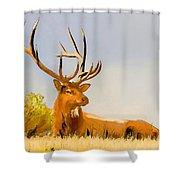 Bull Elk Resting In The Grass Shower Curtain