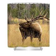 Bull Elk Sideview Shower Curtain