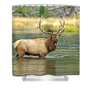 Bull Elk Wading The Madison River Shower Curtain