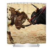 Bull Fight Shower Curtain