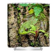 Bull Frog On A Log Shower Curtain