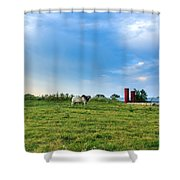 Bull In An East Texas Field Shower Curtain