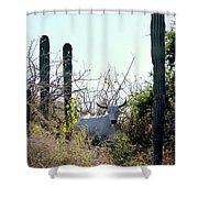 Bull In The Desert Of Mexico Shower Curtain