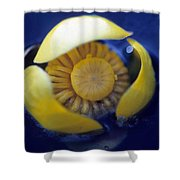 Bull Lily Shower Curtain