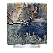 Bull Moose 02 Shower Curtain
