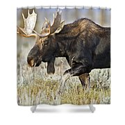 Bull Moose Crossing The Sage  Shower Curtain
