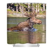Bull Moose Goes For A Swim Shower Curtain