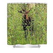 Bull Moose Guards The Aspen Shower Curtain