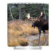 Bull Moose In Stream Shower Curtain by Natural Selection Bill Byrne