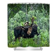 Bull Moose In The Bushes Shower Curtain