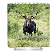 Bull Moose Stands Guard Shower Curtain