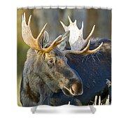 Bull Moose Up Close Shower Curtain