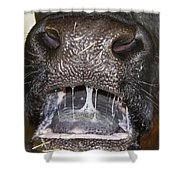 Bull Nose Shower Curtain