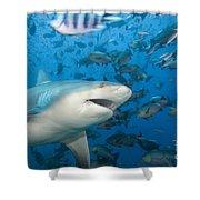 Bull Shark Shower Curtain