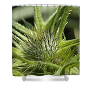 Bull Thistle - New England Shower Curtain