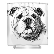 Bulldog-portrait-drawing Shower Curtain