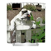 Bulldog Sniffing Flower At Garden Fence Shower Curtain