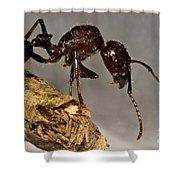 Bullet Ant Shower Curtain