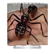 Bullet Ant On Hand Shower Curtain