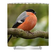 Bullfinch Shower Curtain