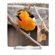 Bullock's Oriole Shower Curtain