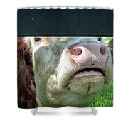 Bull's Eye Peek A Boo Deekflo Shower Curtain
