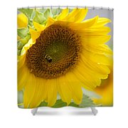Bumble Bee And The Sunflower Shower Curtain